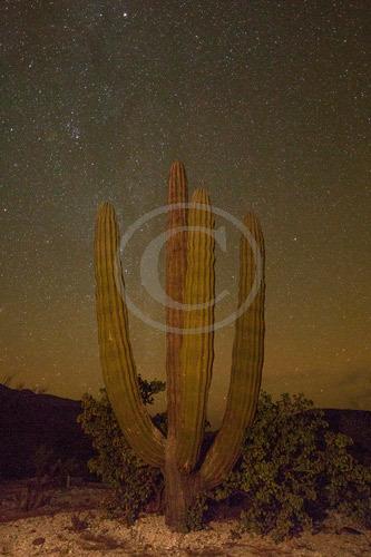 Cactus - Sea of Cortez