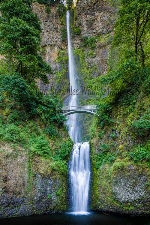 Mulnomah Falls, Columbia Gorge