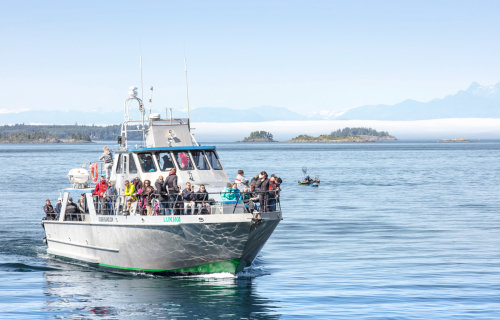 Whale watching from Telegraph Cove, Vancouver Island