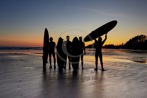 Surfers at Sunset - Vancouver Island