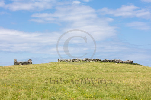 Site of old church on Unst