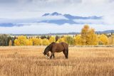 Ranch horse in fall colours