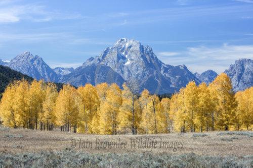 Fall Colour - Grand Tetons