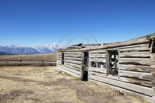 Shane Movie Cabin - Grand Tetons