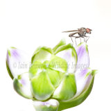 Insect on Petal