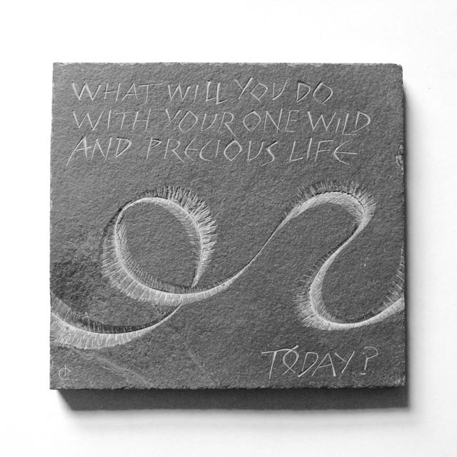 What will you do with your one wild and precious life, today?