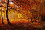 Gold Forest
