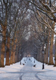 Wintry Green Park