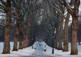 Wintry Green Park