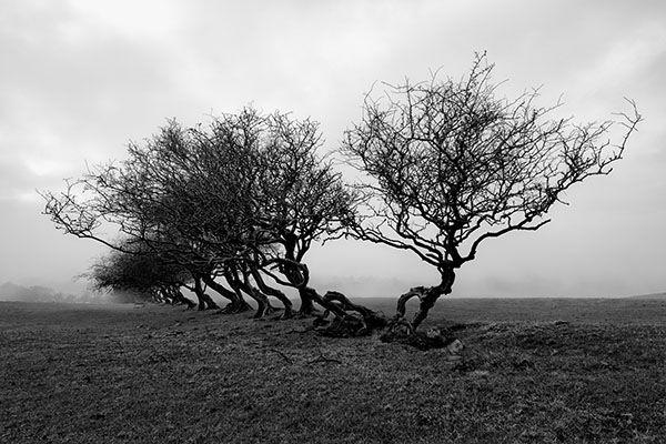 Bryn Goleu Trees