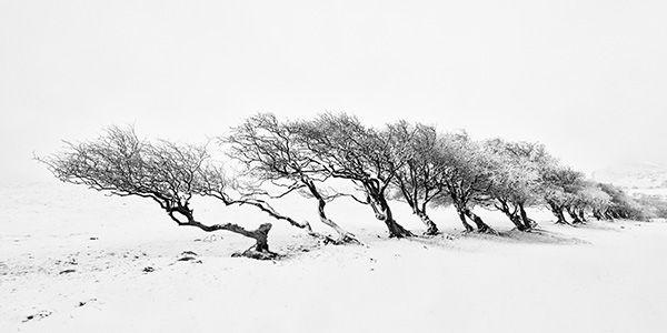 Nannerch Trees