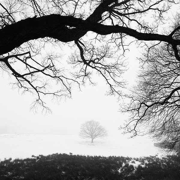 Tree - Snow #1