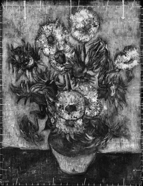 Van Gogh Sunflower - Amsterdam X-Ray