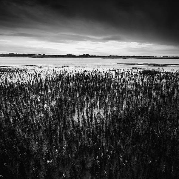 The Edge of the Saltmarsh
