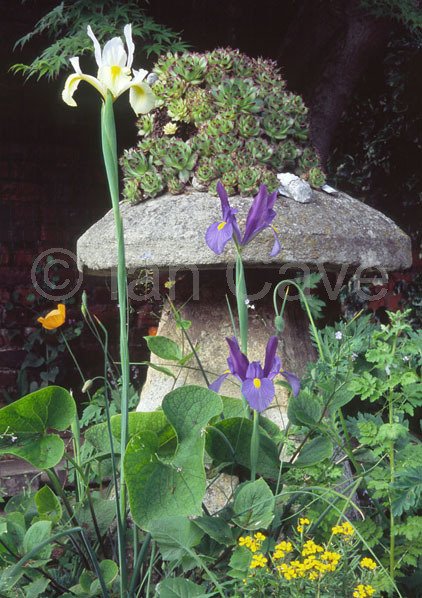 Staddle stone in Cotswold garden