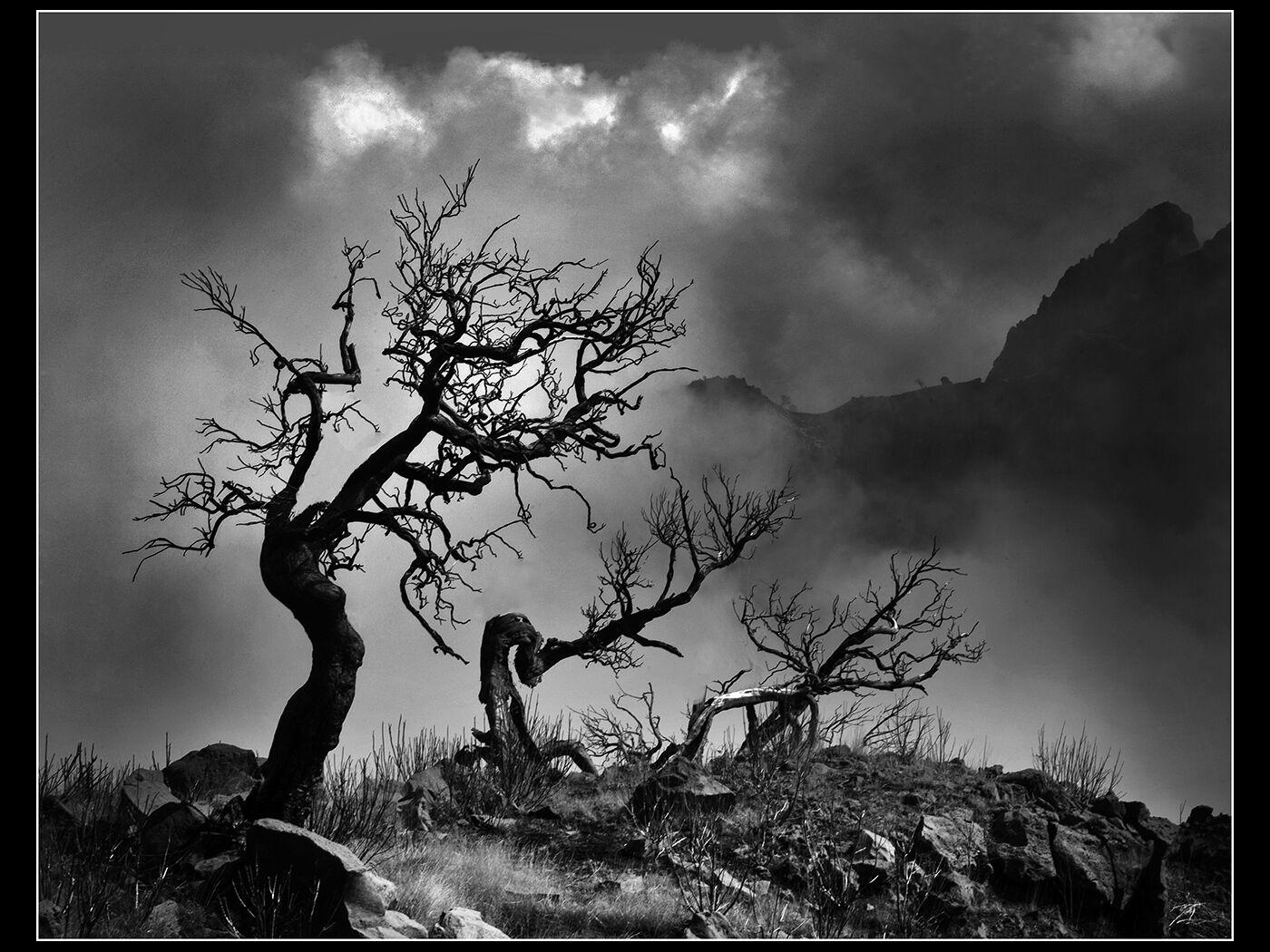 GNARLY TREES