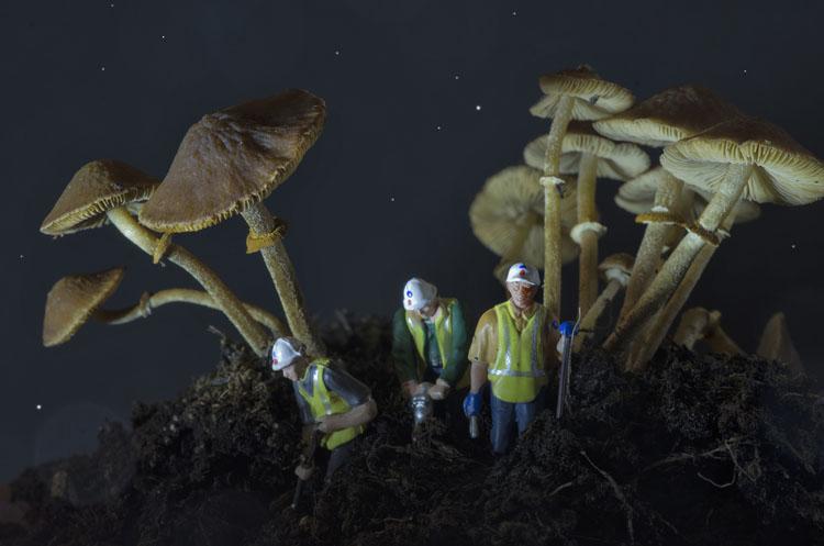 Digging for Mushrooms