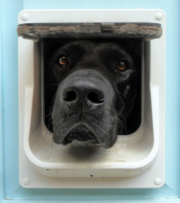 Dog in a Flap
