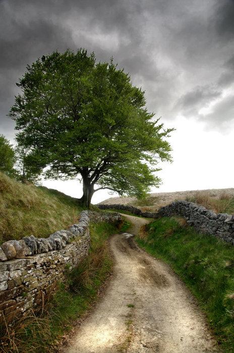 Lone Tree 4
