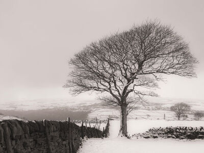 Lone Tree Mono