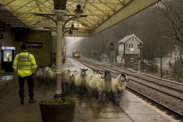 Policeman and Sheep at Station