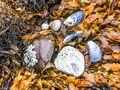 Shells and Seaweed (1)