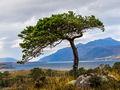 Loch Maree (2)