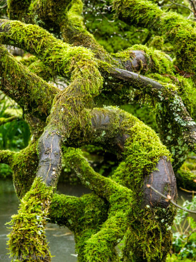 Moss-covered Branches