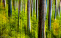 Abernethy Forest (2)