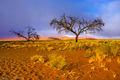 Namib (4)