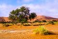 Namib (3)