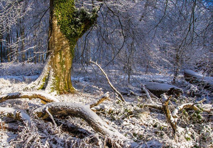 Savernake Forest (3)