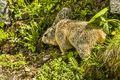 Marmot (3)