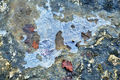Abstract: Ice on rock