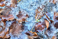 Ice and Leaves (2)