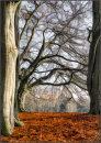 Beechwood tracery