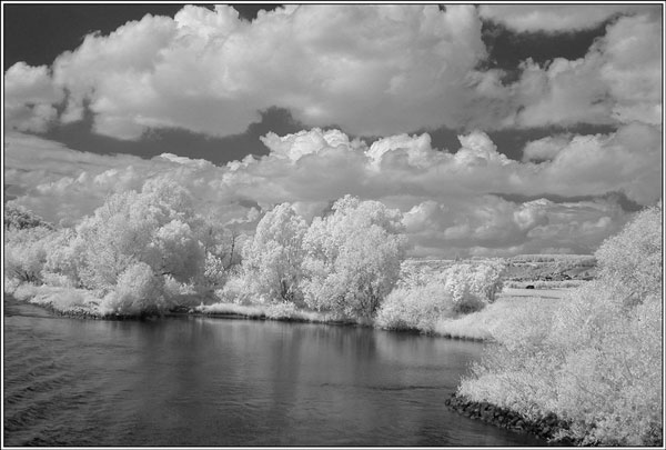Danube willows