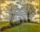 Dramatic tree duo