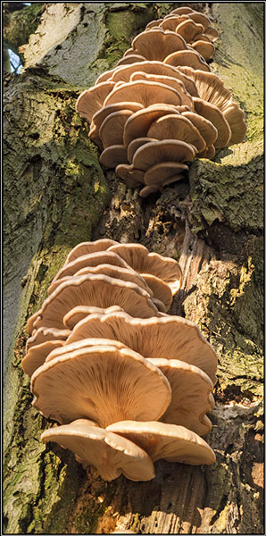 Fungal tower