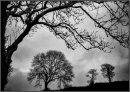 Garn Goch trees