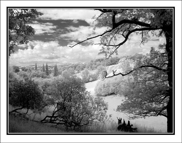 Sylvan view