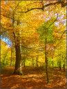 Vibrant beechwood