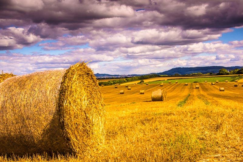 Barrel of Hay