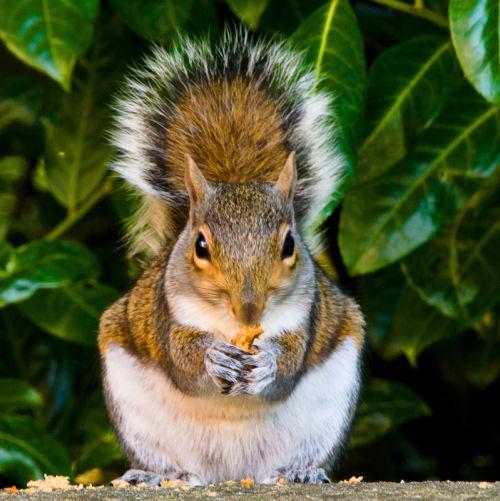 Friendly squirrel.