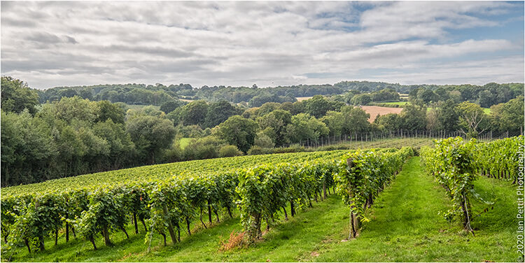 A COUNTRY VINEYARD