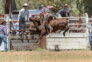 BODDINGTONRODEO2014-10-web
