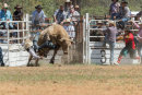BODDINGTONRODEO2014-192-web