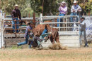 BODDINGTONRODEO2014-22-web
