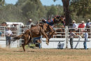 BODDINGTONRODEO2014-240-web