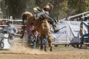 BODDINGTONRODEO2014-306-web